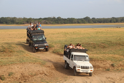 Jeep safari Sri Lanka