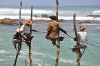 Local fisherman Sri Lanka