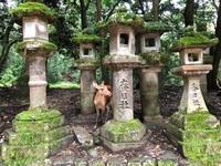 Nara hert Nara Japan