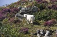 Conwy bergen Wales