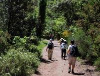 Cinque Terre bos Italie