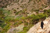 Vallei palmbomen La Gomera