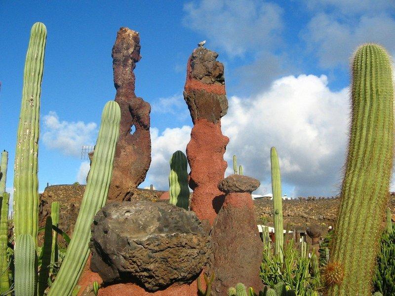 Cactus op El Teide