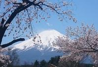 Kawaguchiko meer Fuji kersenbloesem Japan