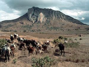 Horombe plateau – koeien met herdersjongen