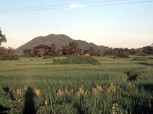 Onderweg - rijstvelden