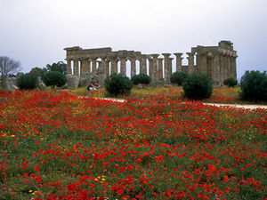 Selinunte - tempel tussen klaprozen