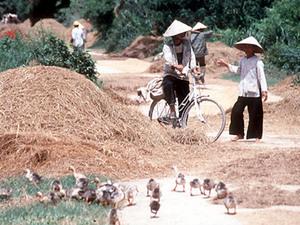 Hoi An - fietstocht