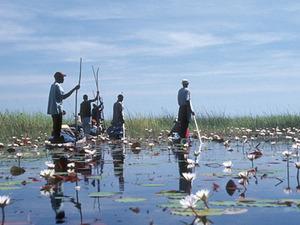 Okavango delta – gezicht vanuit mokoro
