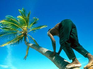 Zanzibar – man in palmboom