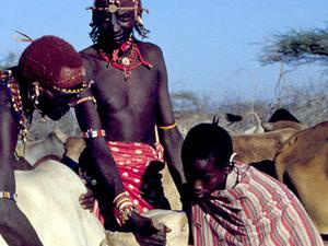 Samburu NP – bloed aftappen bij vee