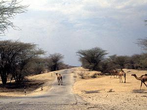 Lake Turkana – luga