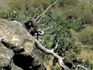 Lake Nakuru - Babooncliff