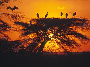 Masai Mara – zonsondergang