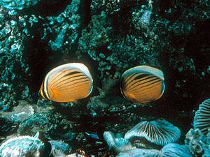 Aqaba - onderwaterleven
