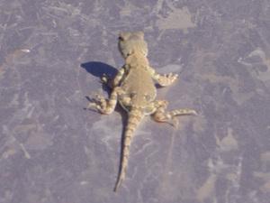 Onderweg naar Midden Godi - Salamander