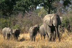 Rondreis Zimbabwe