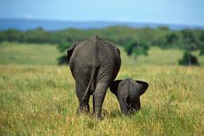 Rondreis Kenia & Oeganda 16 dagen