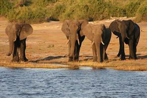 Zuid-Afrika, Botswana & Zimbabwe, 20 dagen
