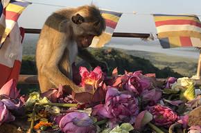 Rondreis Sri Lanka, 21 dagen