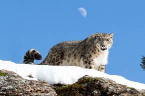 Natuurreis Ladakh, 10 dagen