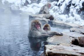 Winterreis Japan, 15 dagen