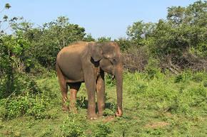 Safarireis Sri Lanka, 15 dagen
