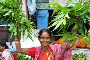 Kookreis India, 15 dagen