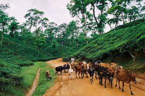 Rondreis Bangladesh, 18 dagen