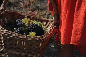 Wijnreis Moldavië, 8 dagen