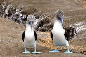 Rondreis Ecuador, met verlenging Galapagos, 29 dagen