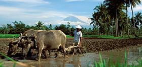 Indonesie, 23 dagen