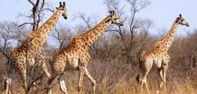 Zuid-Afrika Tuinroute en Kruger nationaal park, 15 dagen
