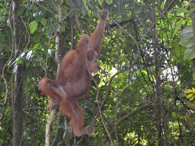 Sumatra, Java, Bali & Lombok 28 dgn