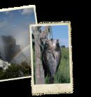 Rondreis Zuid-Afrika, Botswana, Namibië & Victoriawatervallen lodge/hotel, 24 dagen