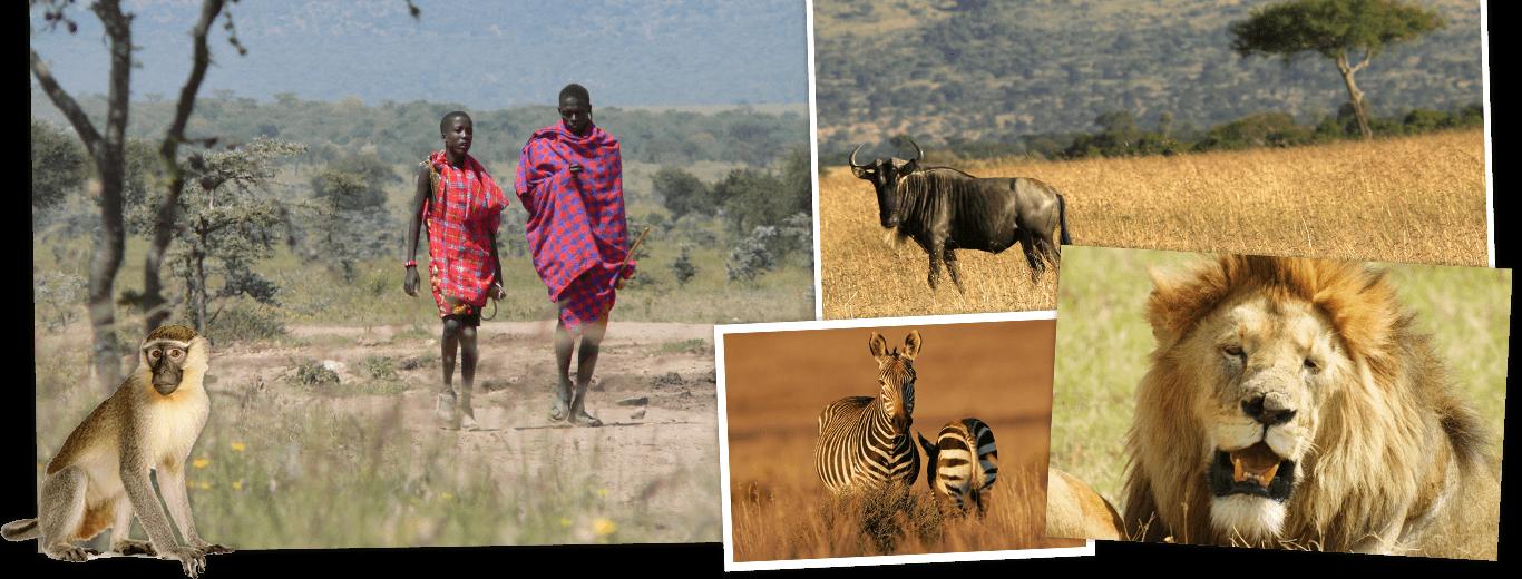 Kenia & Tanzania lodge/hotelreis