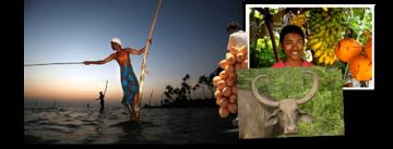 Bekijk de Rondreis Sri Lanka, 21 dagen van Djoser