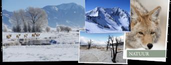 Natuurreis Amerika, Yellowstone