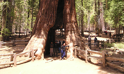 Yosemite - sequoia